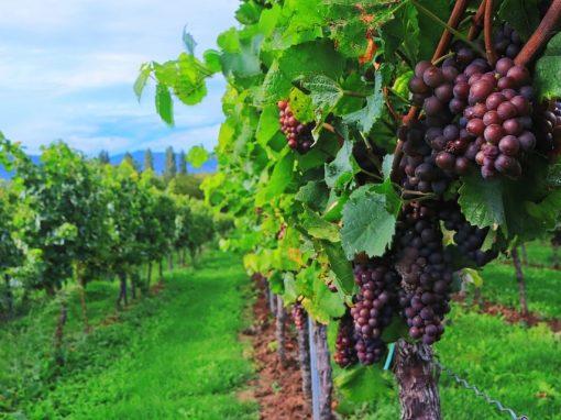Programa Vino, Cambio Climático y Biodiversidad
