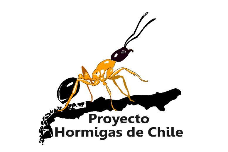 Hormigas de Chile