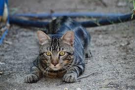 En busca de los gatos cazadores de pájaros