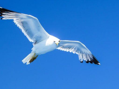 Red de Varamientos de Aves Marinas (REVAM)